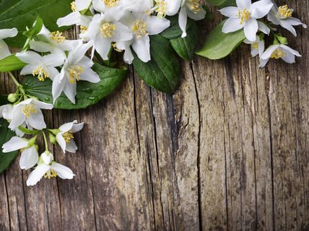 Beautiful jasmine flower on rustic wooden table Фото со стока