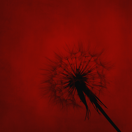 textured wall: Dandelion silhouette on red canvas textured background. Wall art floral design.