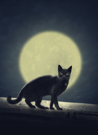 curse: Black cat on the roof and fulll evil moon. Halloween design poster.