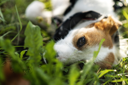 best shelter: Adopted stray dog lloking from the grass. Stock Photo