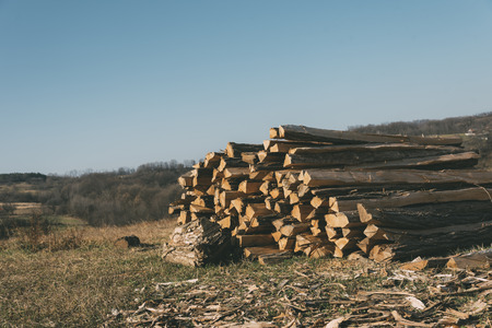 Stack of wooden logs Stock Photo