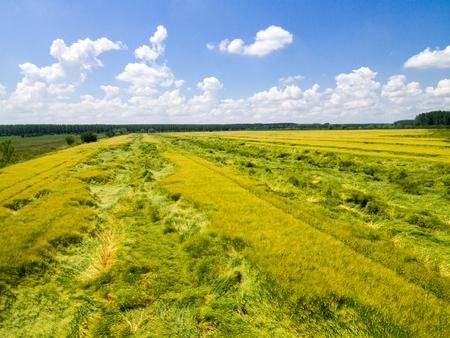 Vista aérea del campo de trigo. Nanture rural forma arriba. Foto de archivo - 81263239