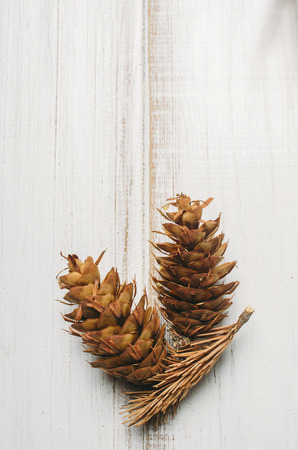Christmas holidays  and new year poster design with pine cone on white wooden background with copyspace.