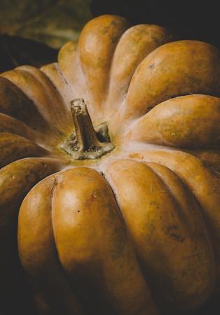 Closeup of halloween pumpkin background. Thanksgiving and halloween holidays concept.