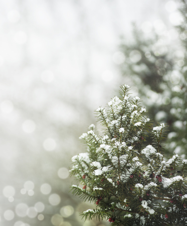 Pine tree under snow and snow flakes. Winter holiday design with copyspace. Фото со стока