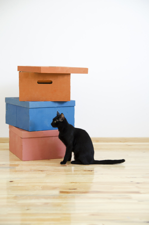 Moving in new home concept. Cardboard boxes and black cat in renovated new house apartment.