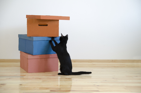 Moving in new home concept. Cardboard boxes and black cat in renovated new house apartment. Empty renovated room with pet.