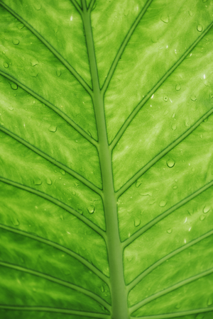 Closeup of green leaf with water drops top view. Nature and ecology background. Go green concept. Фото со стока