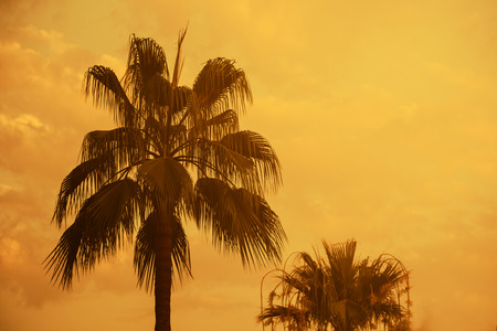 Palm tree on exotic tropical island beach with orange sky at sunset. Summer holiday, beach party and travel background design with retro filter.
