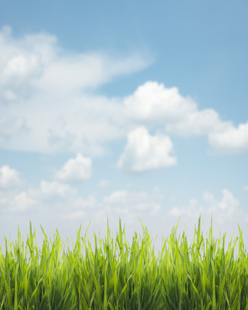 Closeup of fresh green grass and blue sky. Ecology and environment design banner. Nature creative concept background.