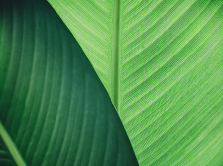 Abstract natural leaves background. Dark green foliage flat lay. Ecology and nature concept. Фото со стока