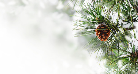 Winter season holiday border background with christmas tree and pone cone closeup. Fir tree brunch with show frame over bokeh background with copyspace. Christmas and new year card design. Archivio Fotografico
