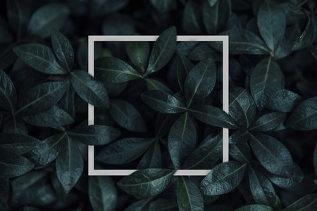 Natural green plant pattern background with white square frame post. Dark nature layout design top view. Moody photo filter. Фото со стока