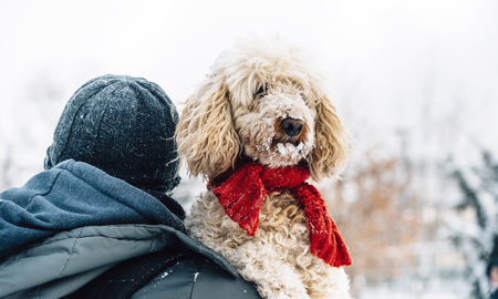 Happy pet and his owner having fun in the snow in winter holiday season. Winter holiday emotion. Man holding cute puddle dog with red scarf. Film filter image. Фото со стока