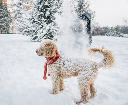 Snowball fight fun with pet and his owner in the snow. Winter holiday emotion. Cute puddle dog and man playing and running in the forest. Film filter image. Banque d'images