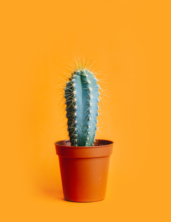 Green cactus in decor pot over bright orange pastel Stock Photo