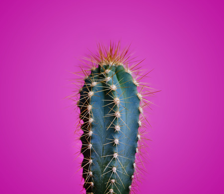 Trendy neon cactus closeup over bright pink pastel