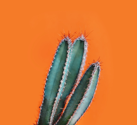 Green cactus closeup over bright orange pastel
