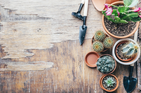 Various cactus and succulent plant in clay pot and gardening tool on vintage wooden