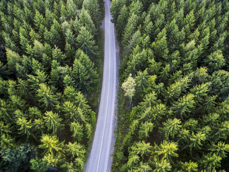 Top view of dark green forest landscape in winter. Aerial nature scene of pine trees and asphalt road. Countryside path trough coniferous wood form above. Adventure travel concept background. Banco de Imagens