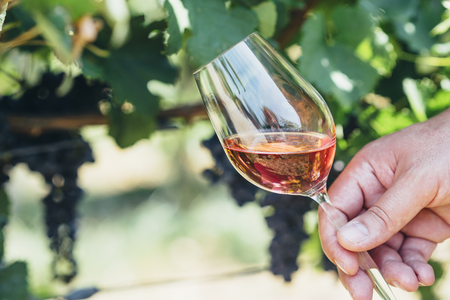 Man holding glass of red wine in vineyard field. Wine tasting in outdoor winery. Grape production and wine making concept. Banco de Imagens