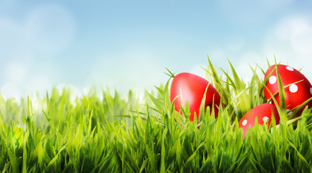 Red easter eggs hide in green grass. Easter holiday and springtime design background.