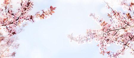 Spring flower blossom closeup with bokeh background. Springtime nature scene with cherry blossom tree in japanese garden and sunlight. Easter holiday seasonal scenery. Pure soft pastel backdrop design. Stock Photo