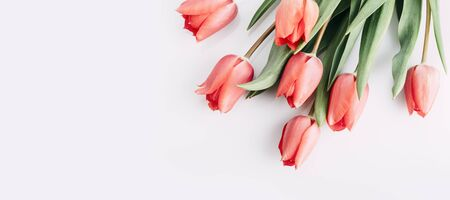 Pink tulips bouquet isolated on white background from above. Top view of red flower bud. Spring and easter greeting card design layout. Pastel minimal banner.