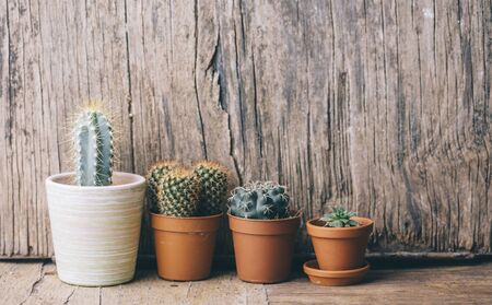 Springtime plant gardening background. Flower cactus and succulent houseplant in pot on wooden table. Cacti seedling growing nursery.