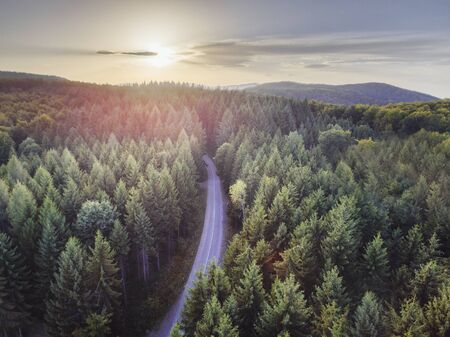 Aerial nature scenic landscape of pine trees and driving road in summer. Top view of dark green forest in mountain at sunset. Travel path and fir wood with sunlight from above. Banco de Imagens