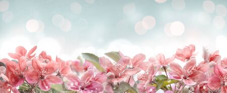 Beautiful pink spring blossom frame on bokeh background. Garden with flower blooming on blue sky. Floral border design. Easter and springtime design with copyspace.