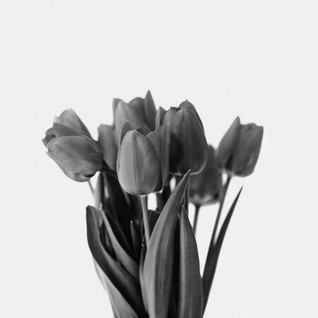 Black and white bouquet of tulip bouquet. Creative modern floral still life.