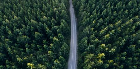 Top view of dark green forest landscape wallpaper art. Aerial nature scene of pine trees and asphalt road banner design. Countryside path trough coniferous wood form above. Adventure travel concept background. Banco de Imagens