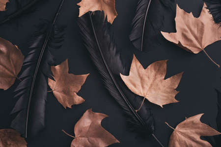 Halloween background pattern with autumn maple leaves and raven black feather. Flat lay. 版權商用圖片