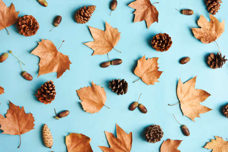 Autumn leaves with acorn and cones composition pattern on pastel blue background from above. Maple leaf texture on color table. Minimal thanksgiving and halloween seasonal design pop art.