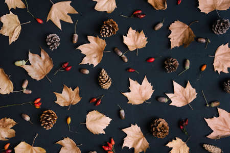 Autumn leaves with acorn and cones composition pattern on dark background from above. Maple leaf texture on black paper. Minimal thanksgiving and halloween seasonal design art. Flat lay.