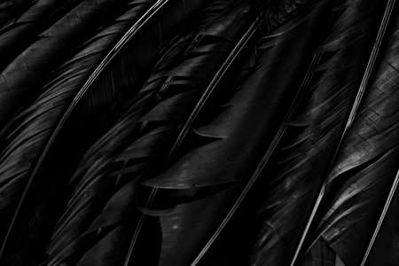 Halloween background with black raven feathers on dark grunge backdrop. Horror gothic abstract design with copyspace. Closeup of bird wing texture. Фото со стока