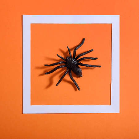 Empty white frame with scary black spider on orange paper. Halloween background layout. Minimal flat lay design.