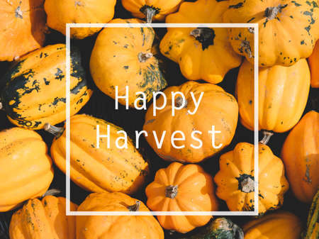 Autumn pumpkins from above. Thanksgiving family dinner greeting card design. Happy harvest concept. Фото со стока