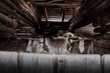 Exotic nordic natural reindeer skins hangs to dry in a rural traditional wood logs barn - Concept of sami and eskimo fur culture, ancient heritage nomad lifestyle and wildlife survival