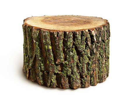 Stump isolated on a white background