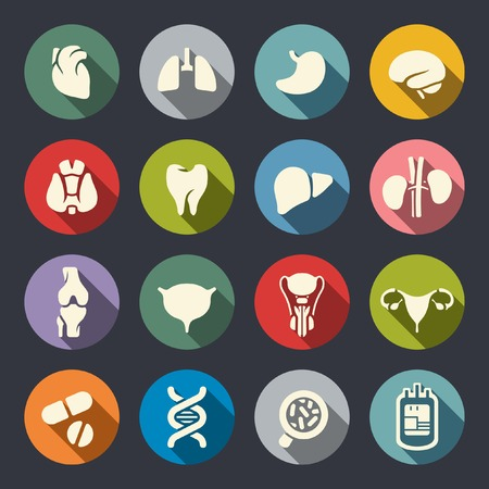 bowel: Human organs icon set  Illustration
