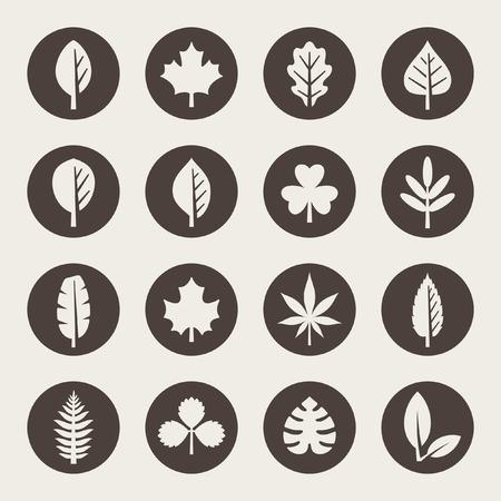 plants species: Foglia icon set