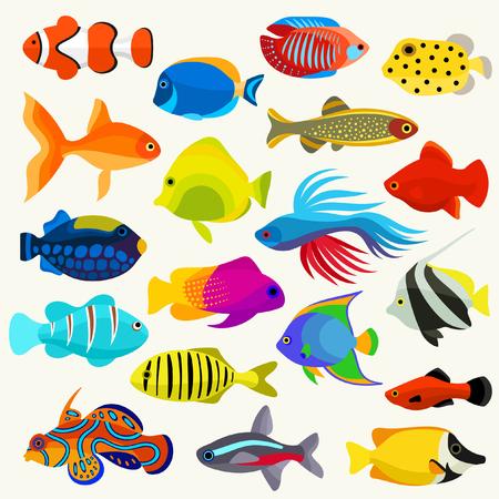 dorado: Fish Colorful Vector Set