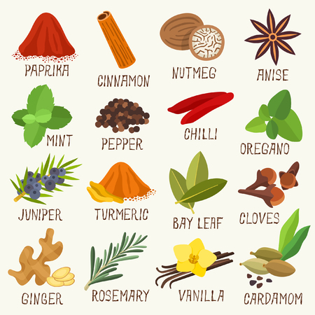 Spices vector illustration