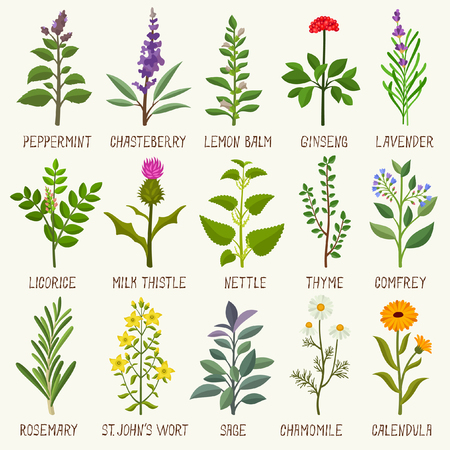 Herbs vector illustration Vectores