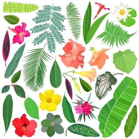 Tropical plants and flowers vector set. Stock Illustratie