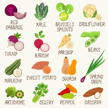 Vegetables  set Vector illustration.