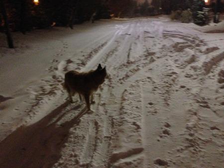 Winter Dog Reklamní fotografie - 42047783
