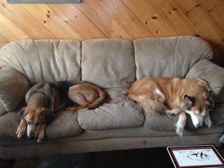 Two dogs napping Reklamní fotografie - 42047795